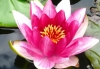 Click for more details about Waterlily Therapies
